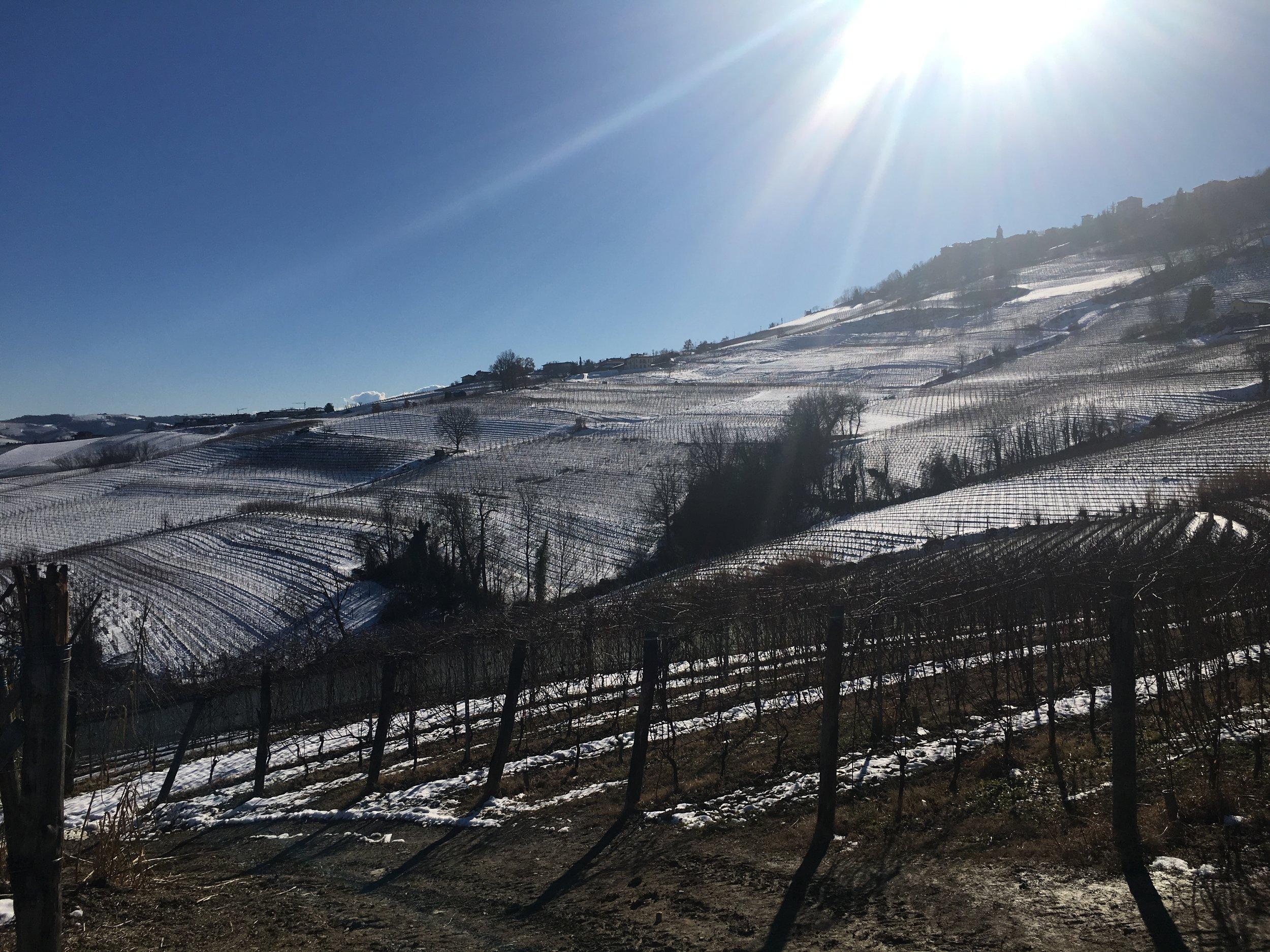 Winter in La Morra, Barolo