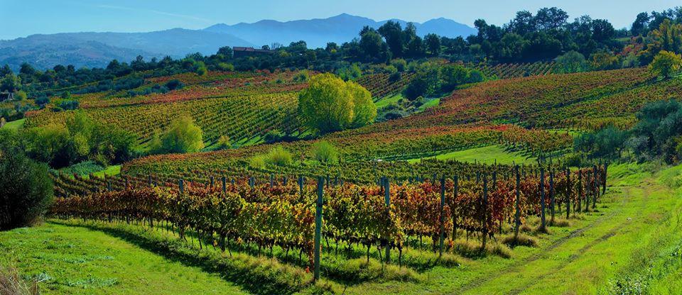 Mastroberardino Vineyards