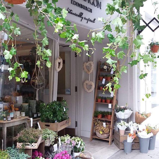 "The @snapdragonedinburgh store looking jolly lovely in the sunshine. Time to upgrade our plant selection don't you think? ________________________________________________________ ""We can't guarantee any sunshine this weekend but we can guarantee a great selection of plants, flowers and lovely things for the home!"" ________________________________________________________  #plantcollector #plantcollection #indoorgarden #urbangardening #plantgoals #plantgang #urbanjunglebloggers #plantshop #flowershop #plantsmakespeoplehappy #instaplant #instaplants #plantsagram #plantlove #homeware #interiorstyle #loveyourhome #lovethelittlethings #botanicaldaydreams #allkindsofmagic #shopindependent #shopsmallbusiness #edinburghshopping #edinburghlifestyle #bruntsfield #snapdragonedinburgh #thecliquelifestyle #theclique #onlineresource #interiorscommunity"