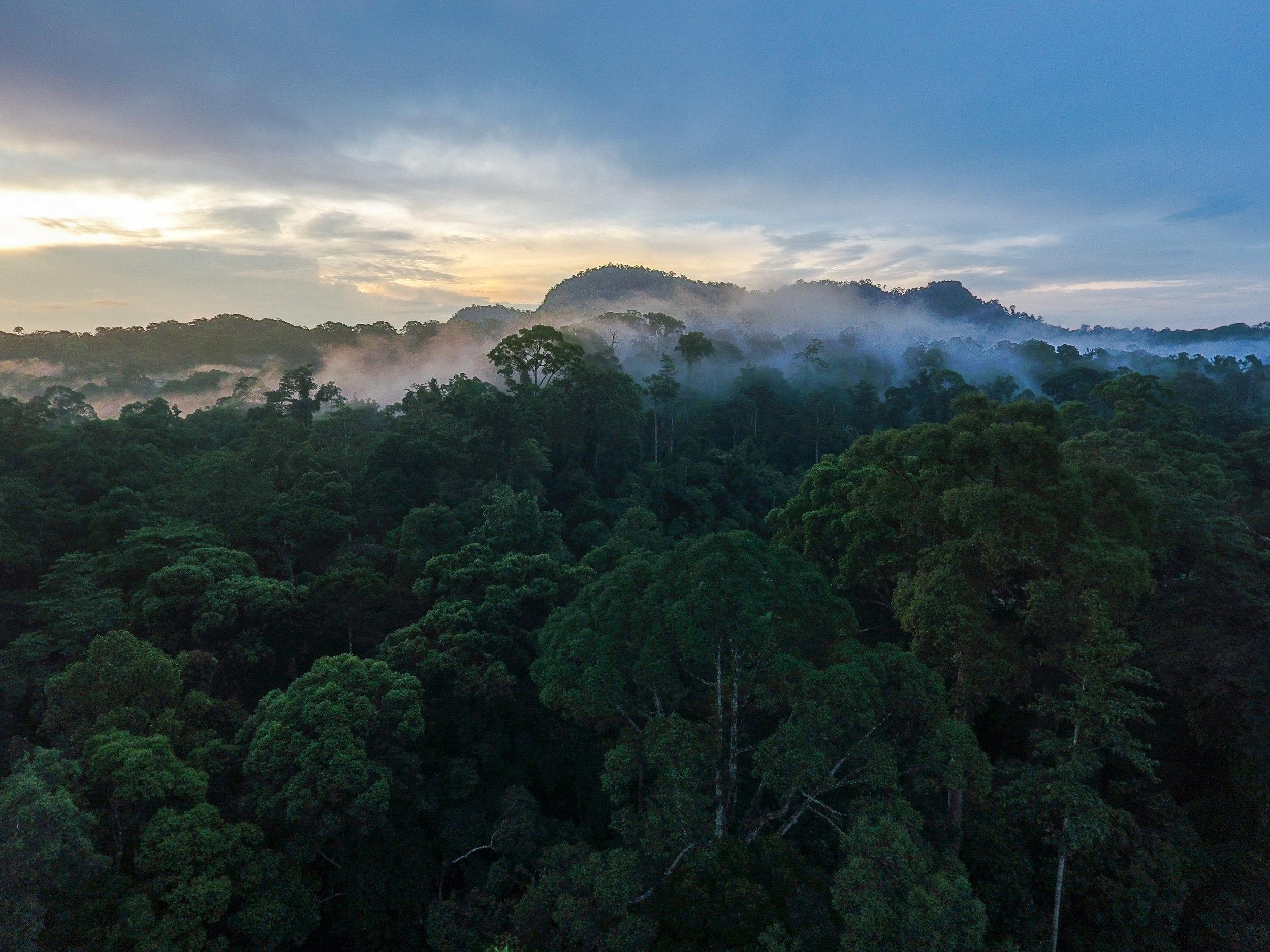 rainforest 1 c Rainforest Trust.jpg