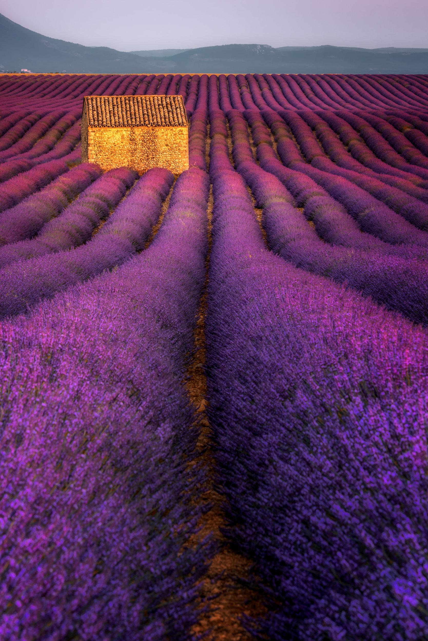Valensole Plateau, Provence, France
