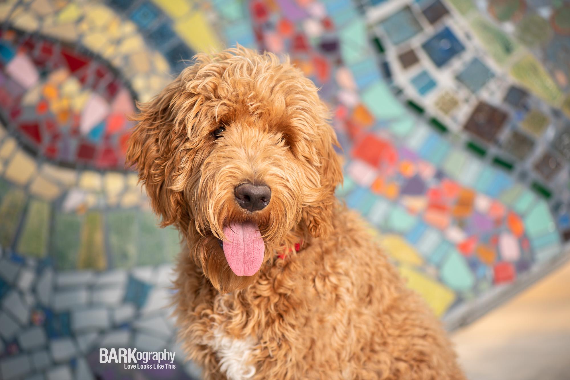 dog-photography-in-MoRA.jpg