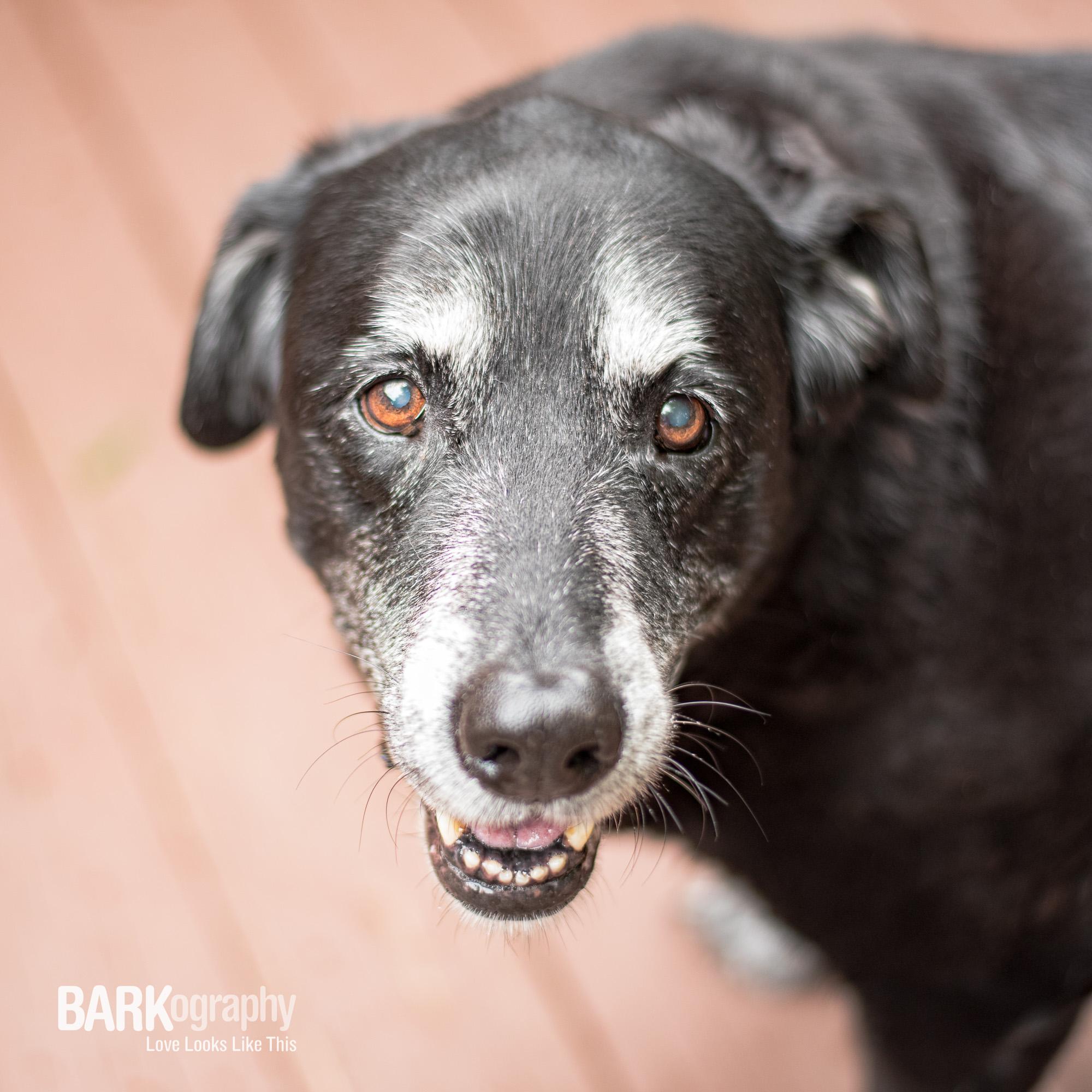 pet sitter of senior dog.JPG