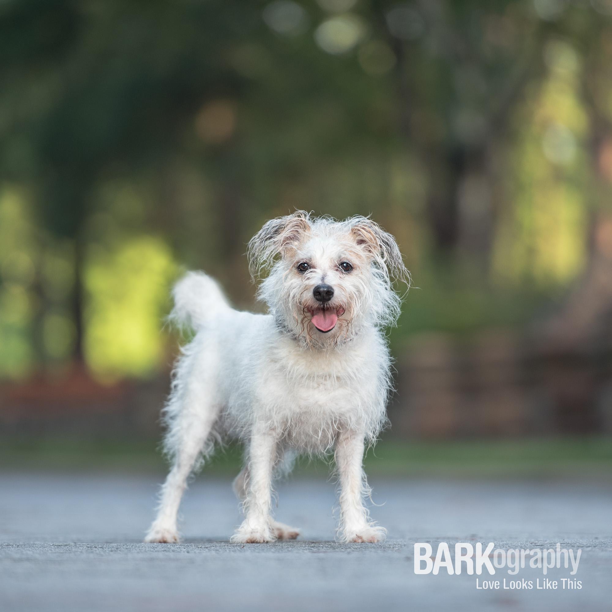 scruffy dog walking client.JPG