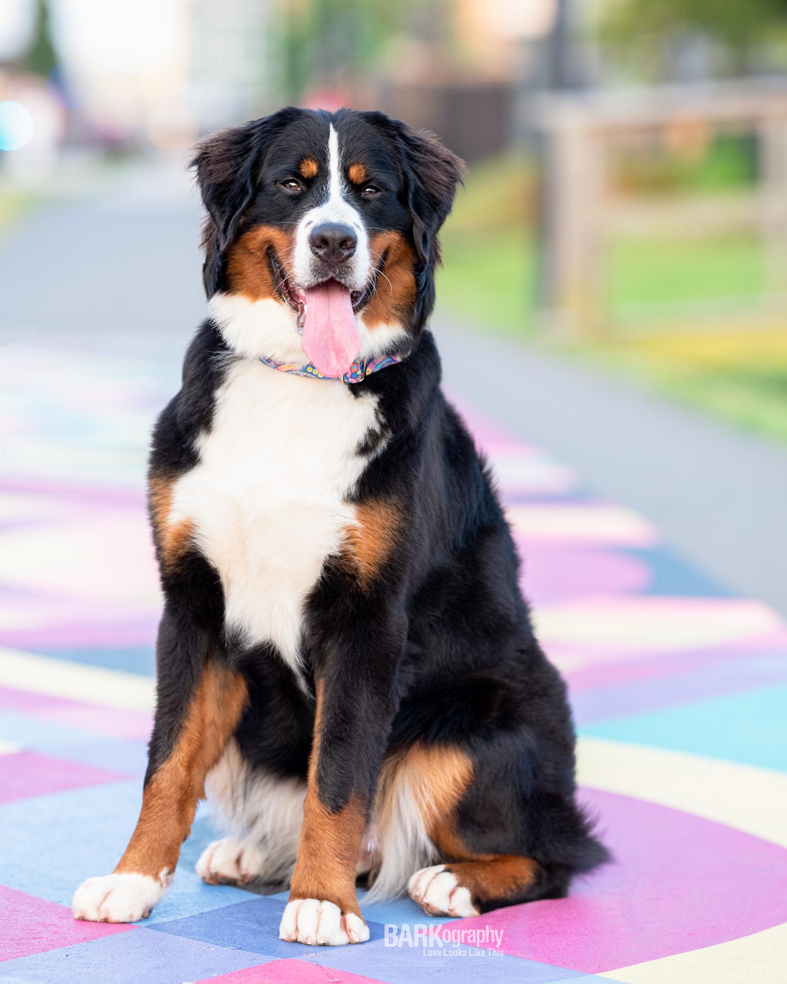 Charlotte North Carolina dog walkers