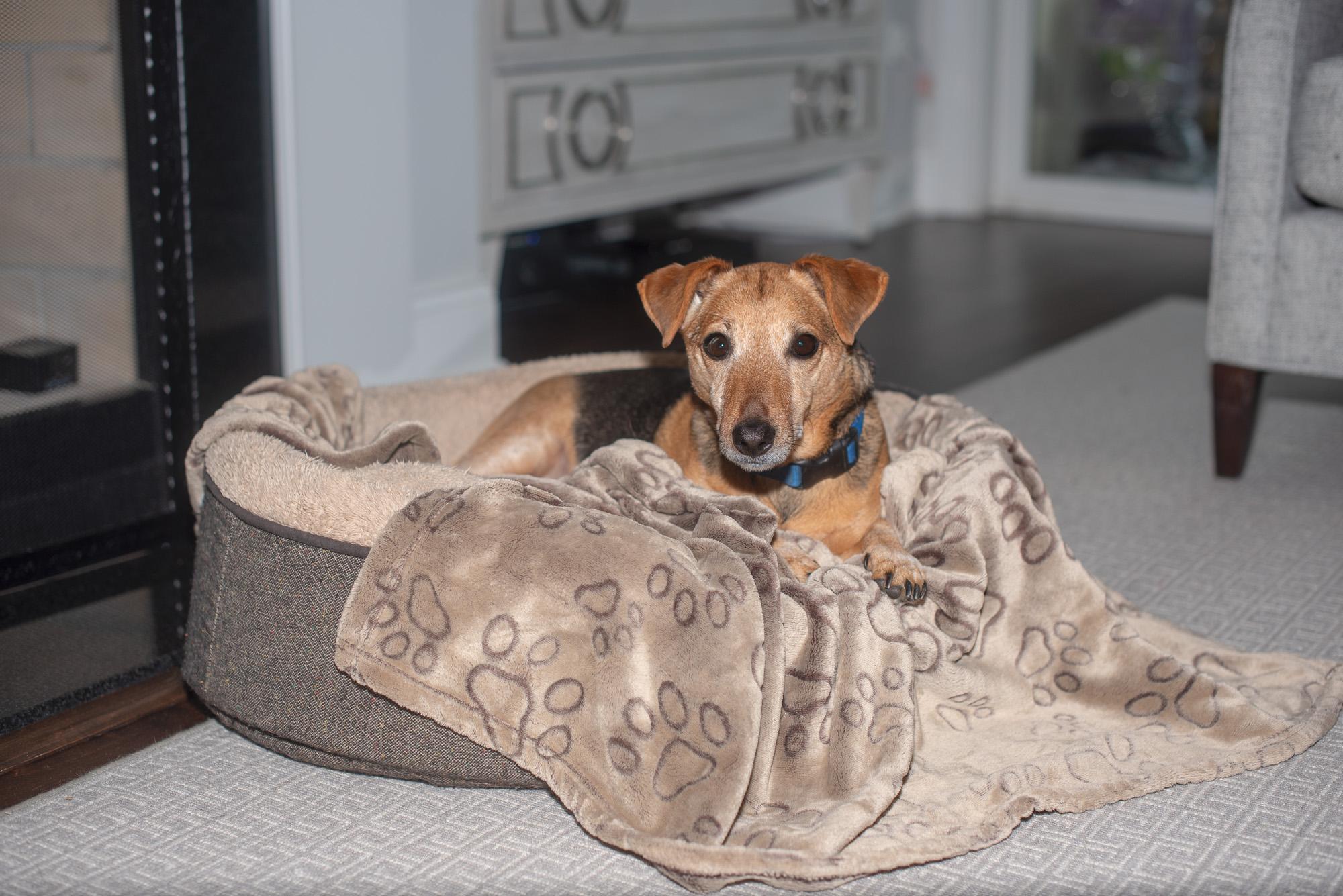 Southpark Charlotte NC dog sitter