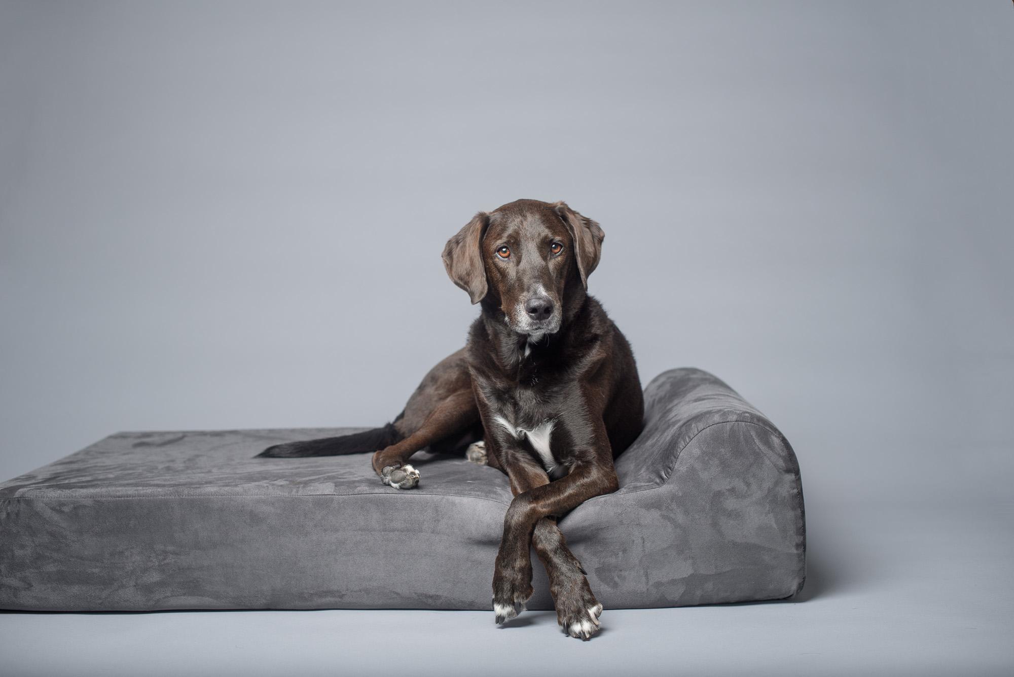 Southpark dog walker dog sitter Charlotte NC