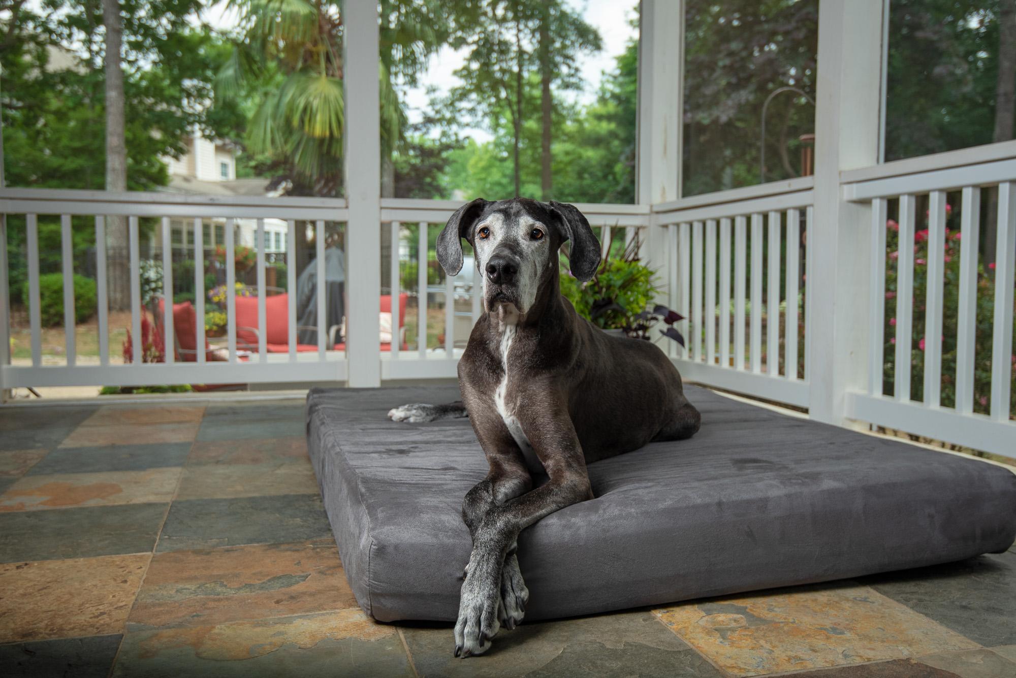 best big dog bed recommendation by dog walker near me