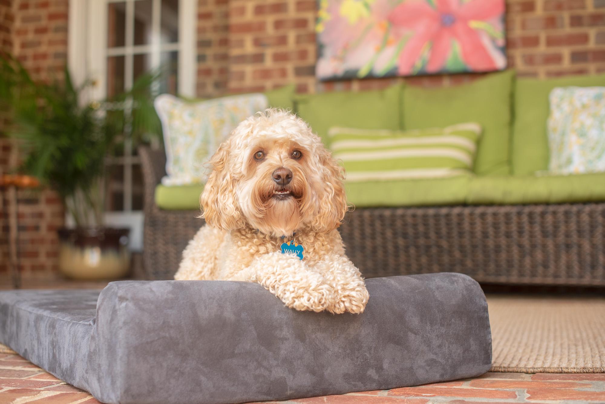 dog walker commercial pet photography.JPG
