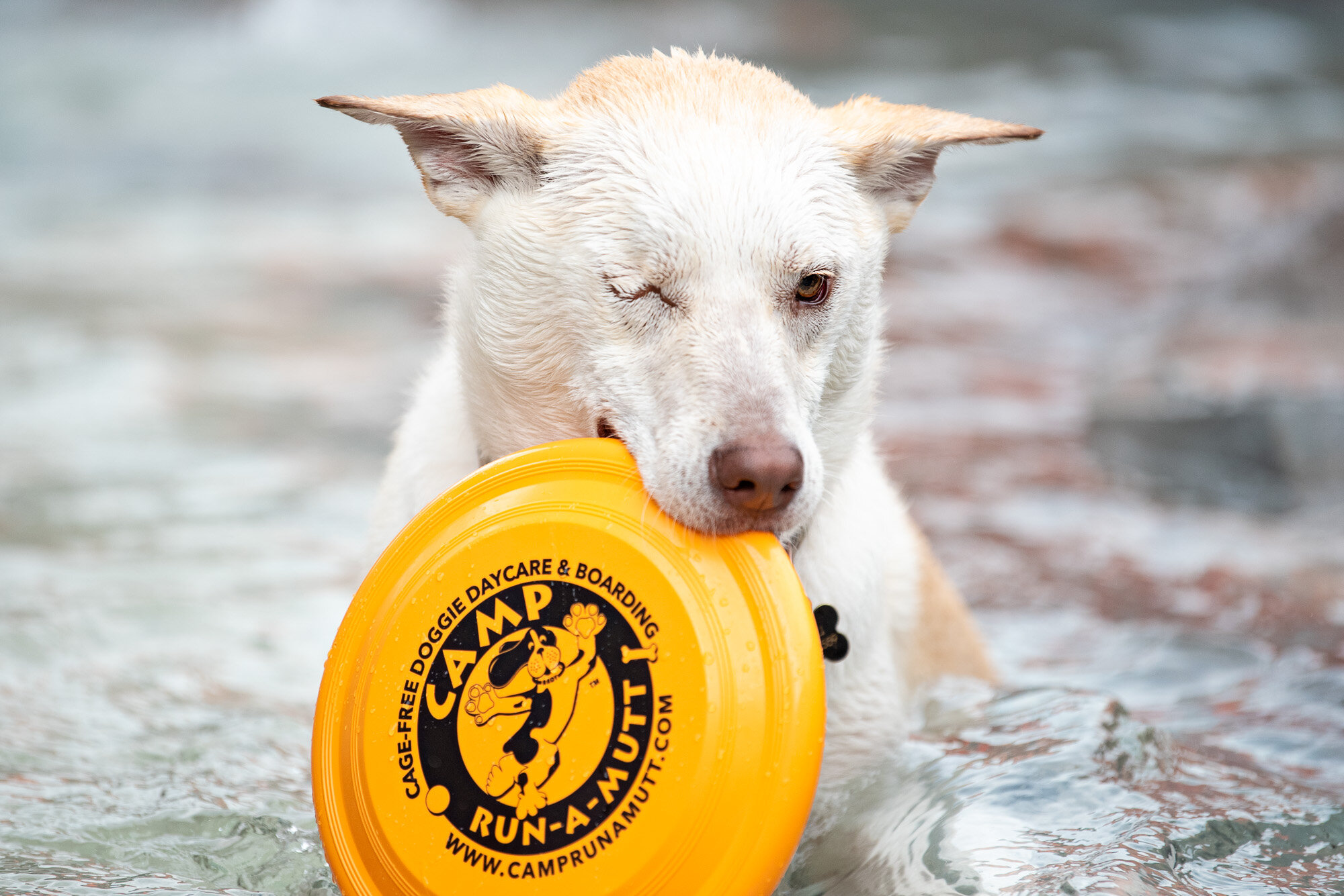 commercial pet photography doggy daycare Charlotte NC
