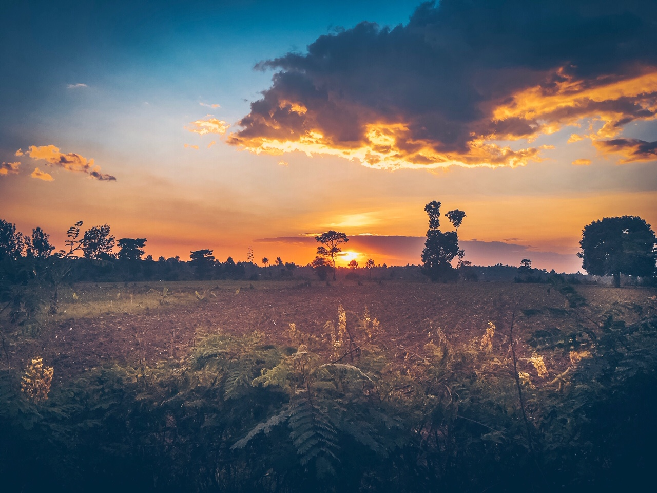 Kenya is more lush than I ever imagined. God's handiwork on display!  Photo by Cullen McDaniel.