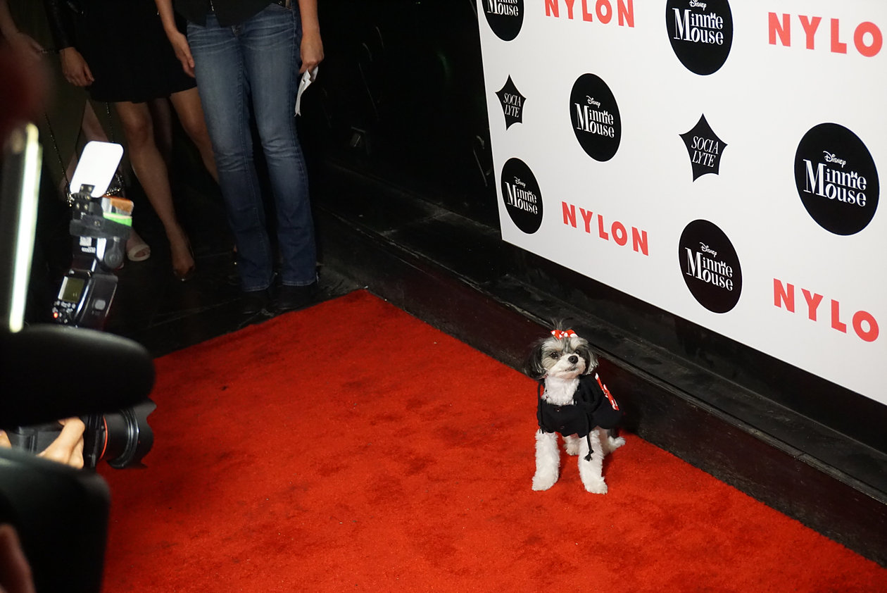 red carpet at #nylonxminniemouse