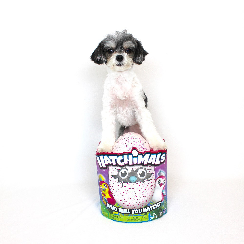 """hatchimals - ($59.99)  tinkerbelle """"the latest craze and a must have this holiday season"""""""