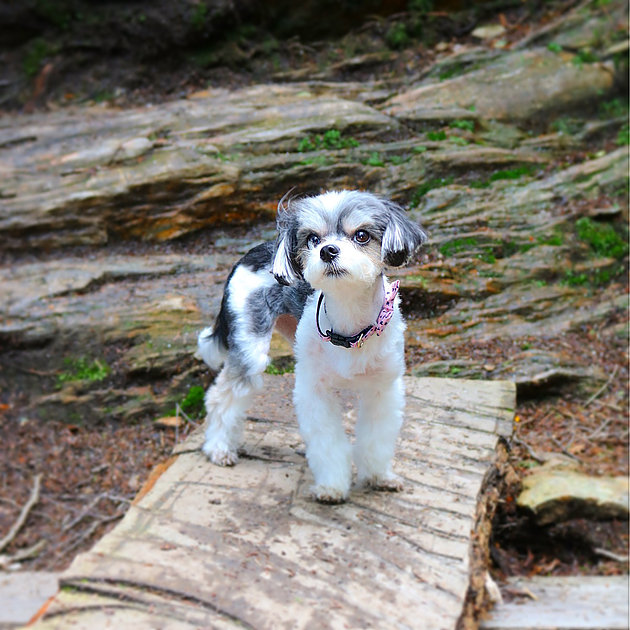 Accompany your human on a hike to the top of Mount Greylock! The hiking trails and top of the mountain/picnic area are all pet friendly! i met many friends on my hike and found lots of photo opps!