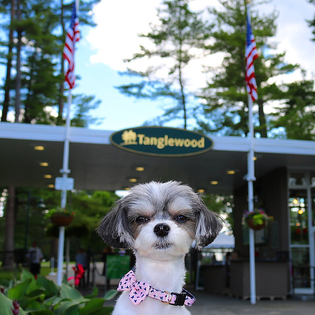 I also visited the historical outdoor concert venue TANGLEWOOD -  where you can enjoy professional music from all different genres on the luscious green lawn! It is a must do in the berkshires!