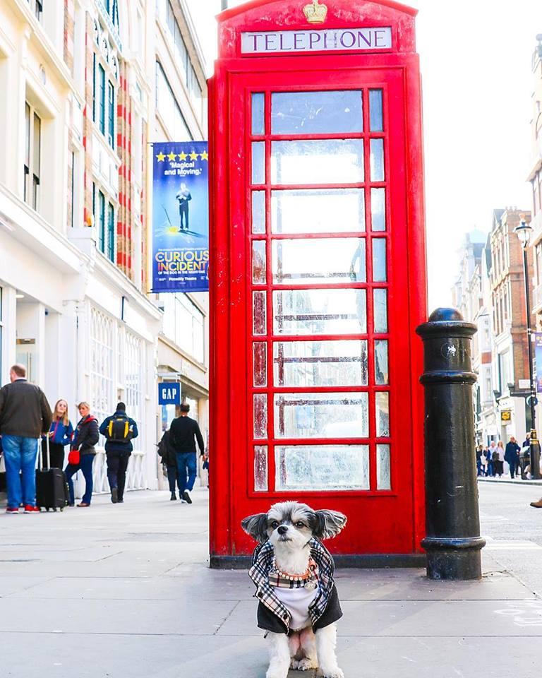 Tinkerbelle in London!
