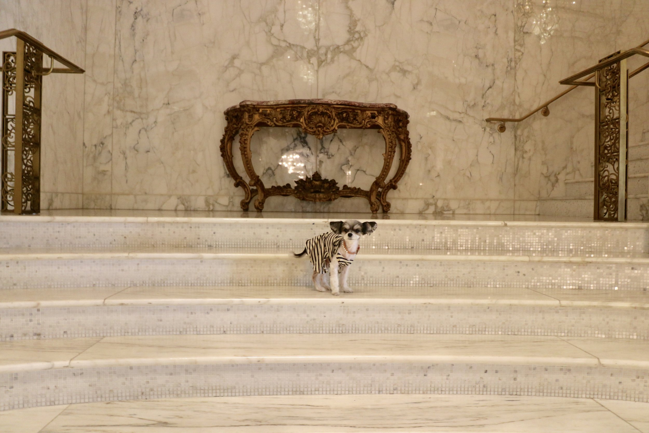 Tinkerblle posing on the marble staircase.