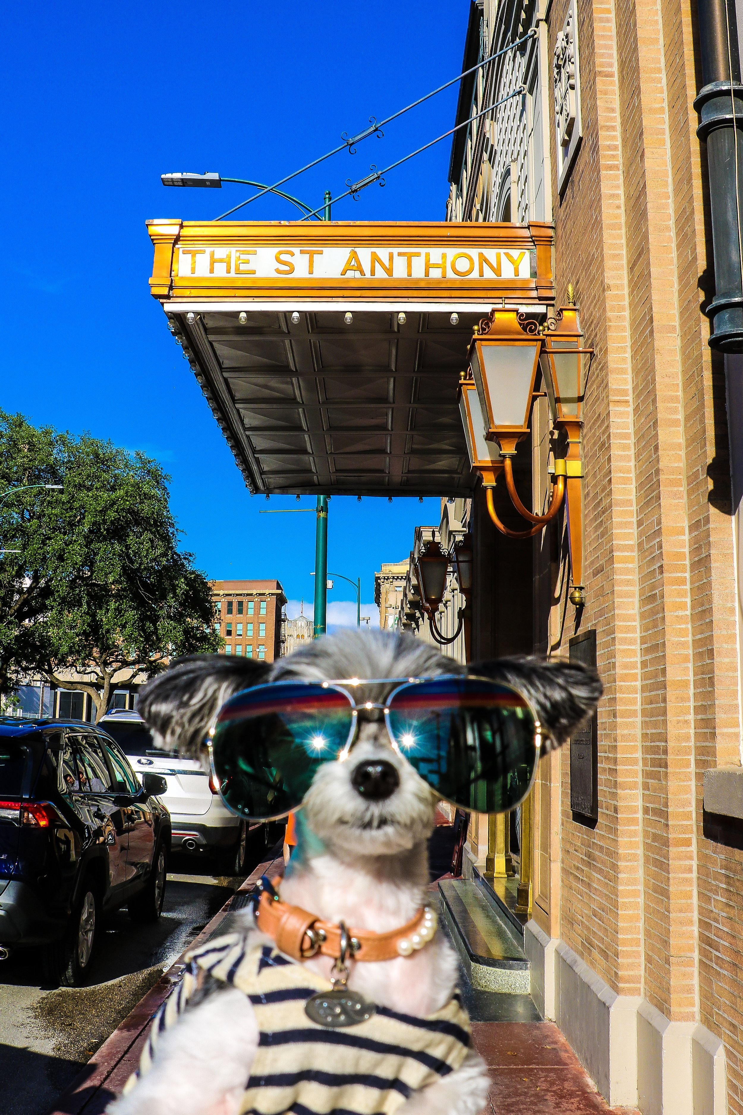 Tinkerbelle posing in front of The St. Anthony Hotel.