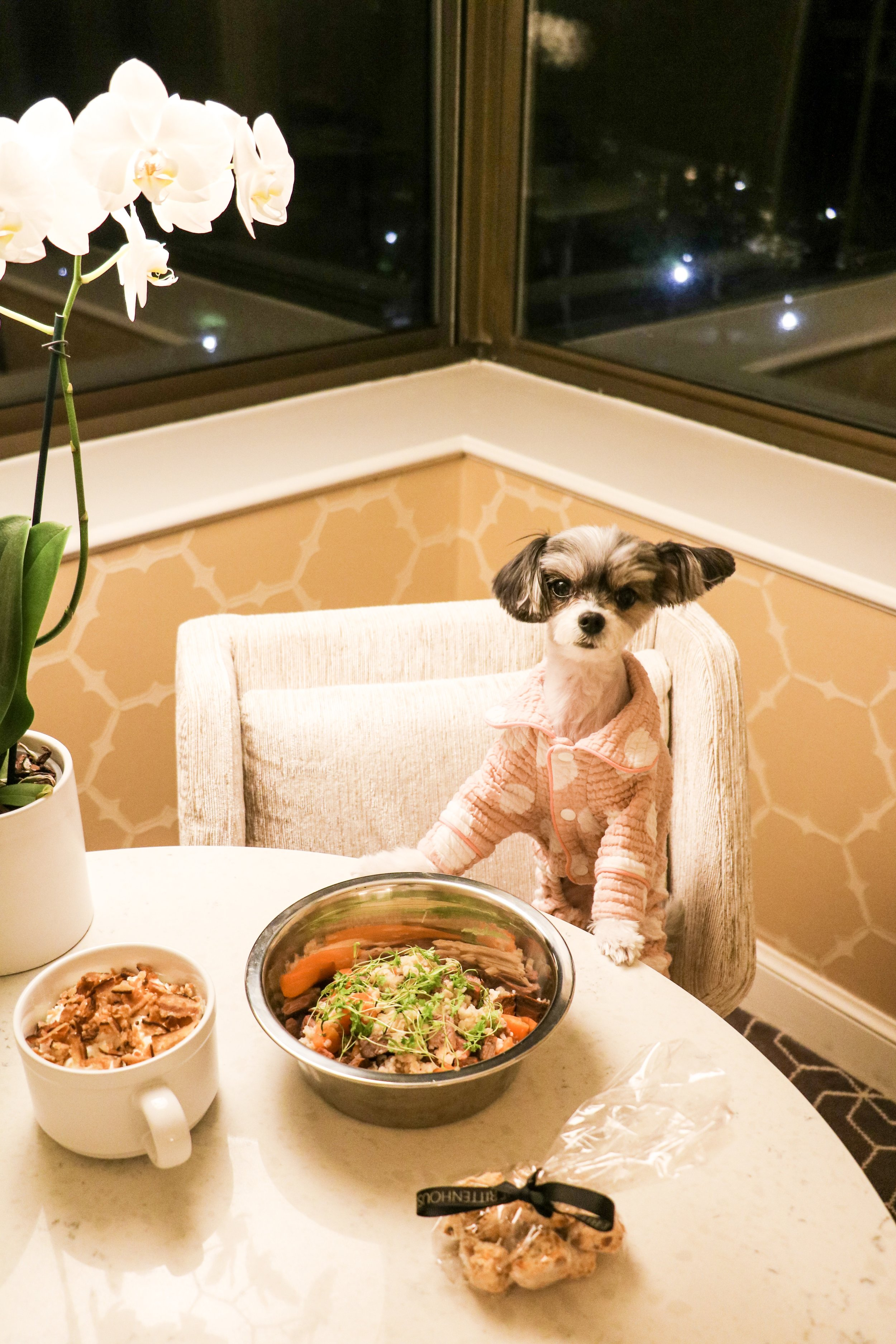Room service dinner for Tink!