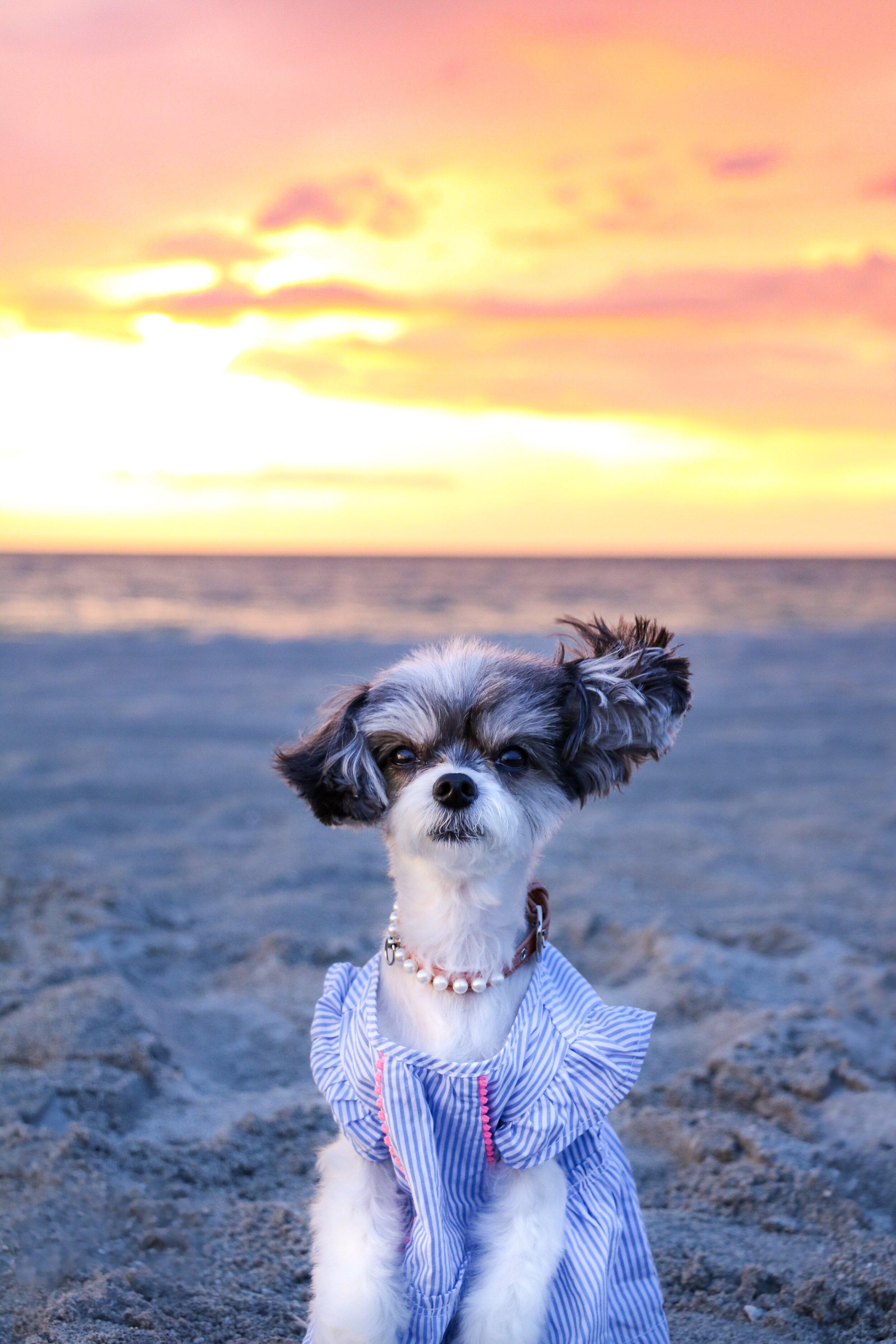 The Captiva Island Sunset on Tween Water's Beach