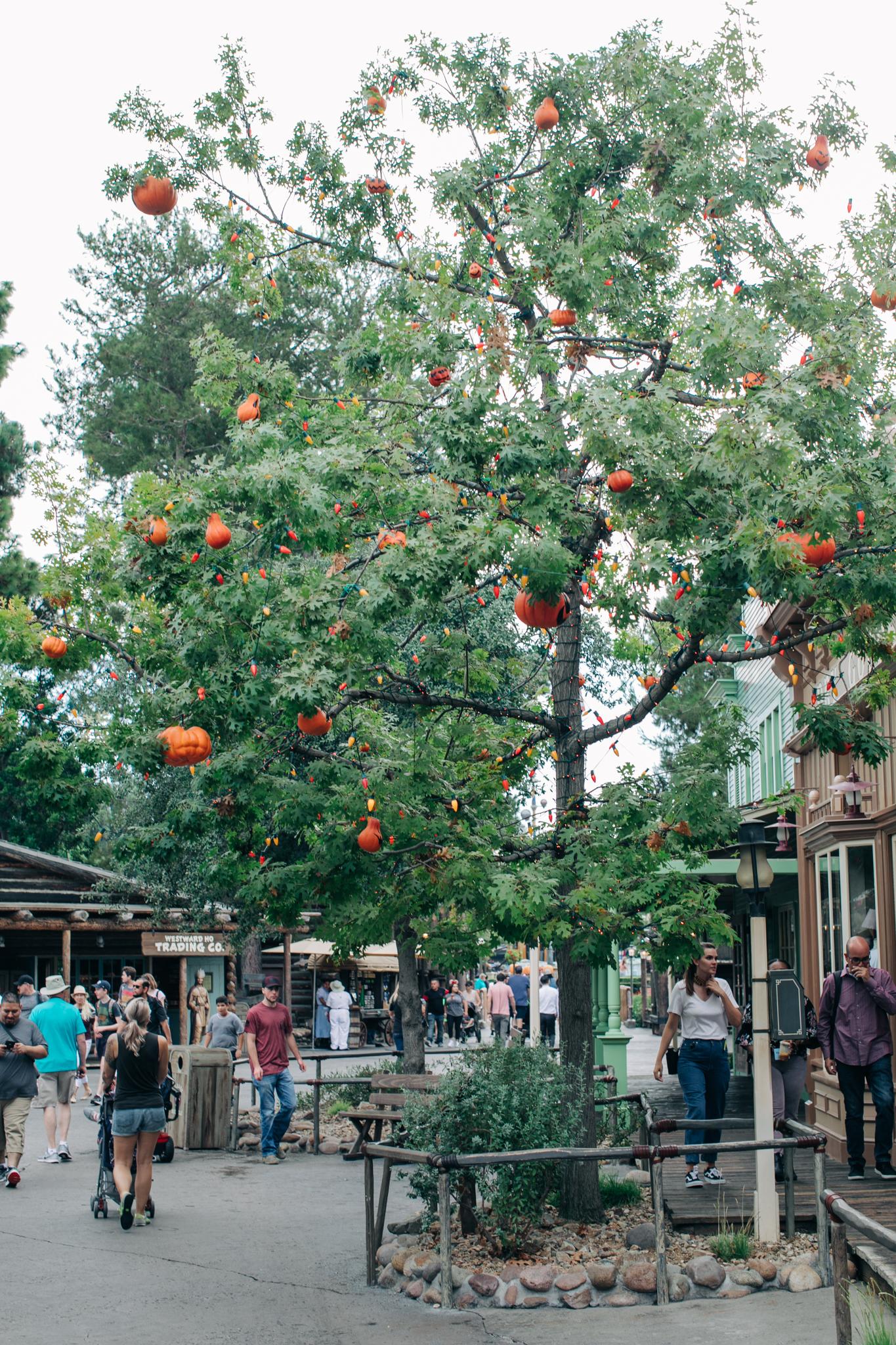 BabyBoyBakery_Disneyland_LilyRo-61.jpg