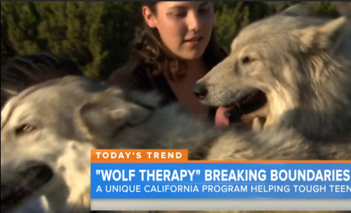Wolf connection is a 501c3 not for profit Wolf-dog rescue and youth empowerment program. This is their story.