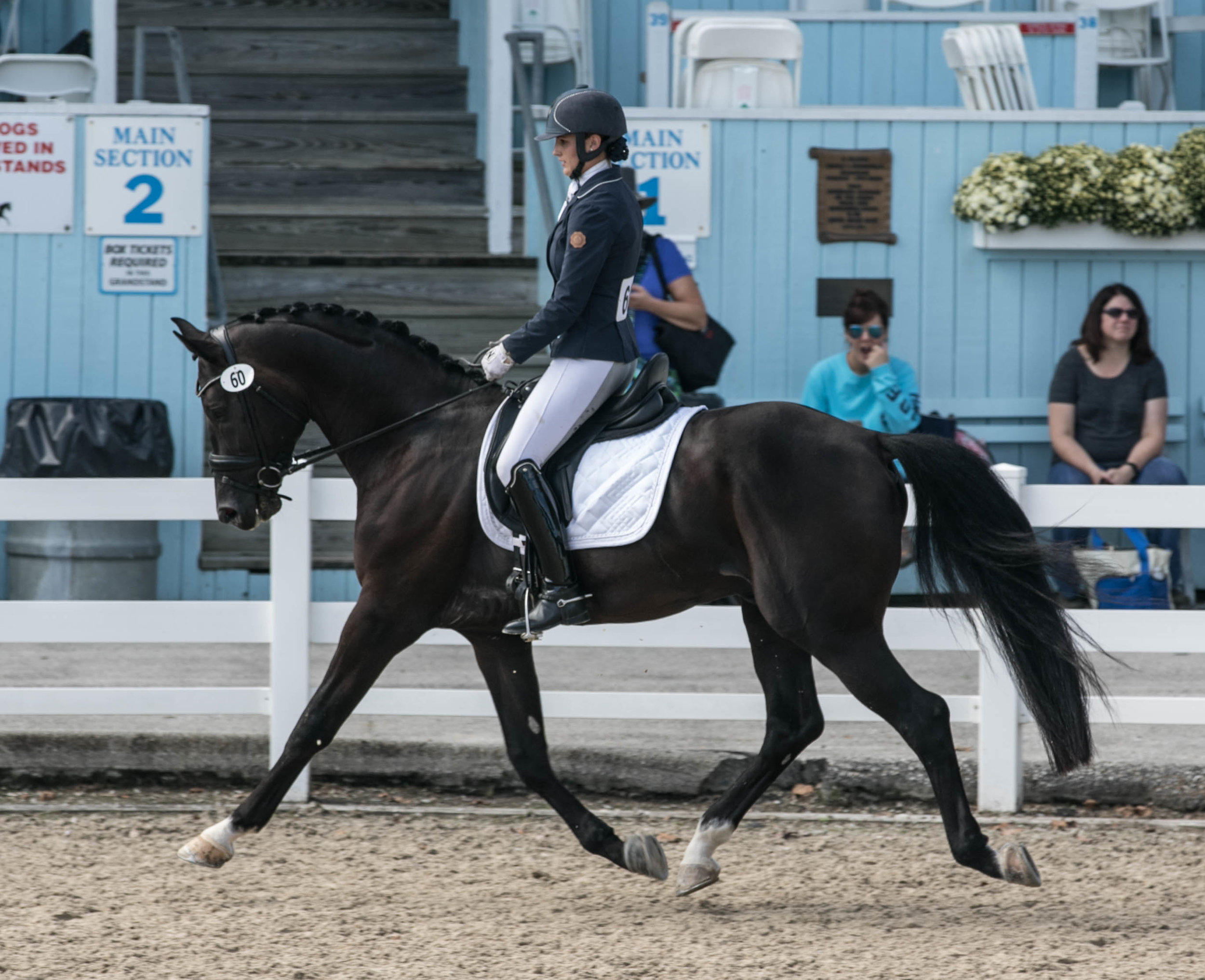 Dressage at Devon 2018 - Dressage at Devon 2018 is a wrap! Davos CF took first place in the Four Year Old Stallion and Geldings Material Class with a score of 83.2 %! He then went on to win the combined Material Class Final, and also the FEI Four Year Old Test. VIDEO: