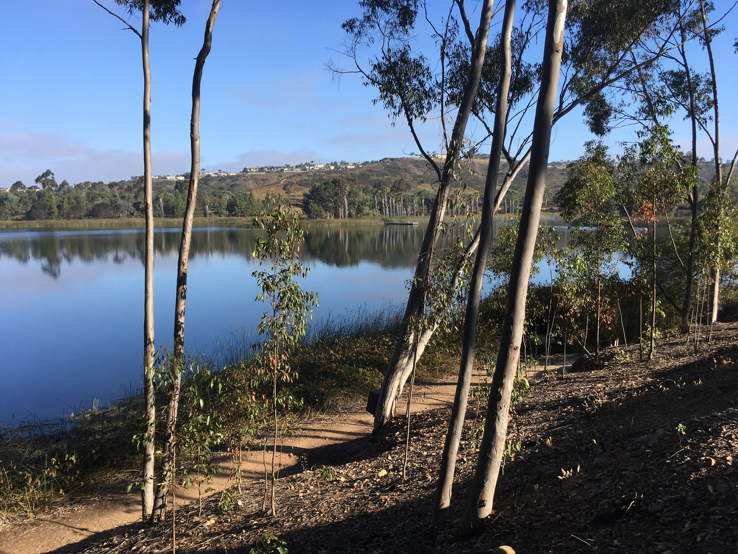 A moment of captivating stillness at Miramar Lake