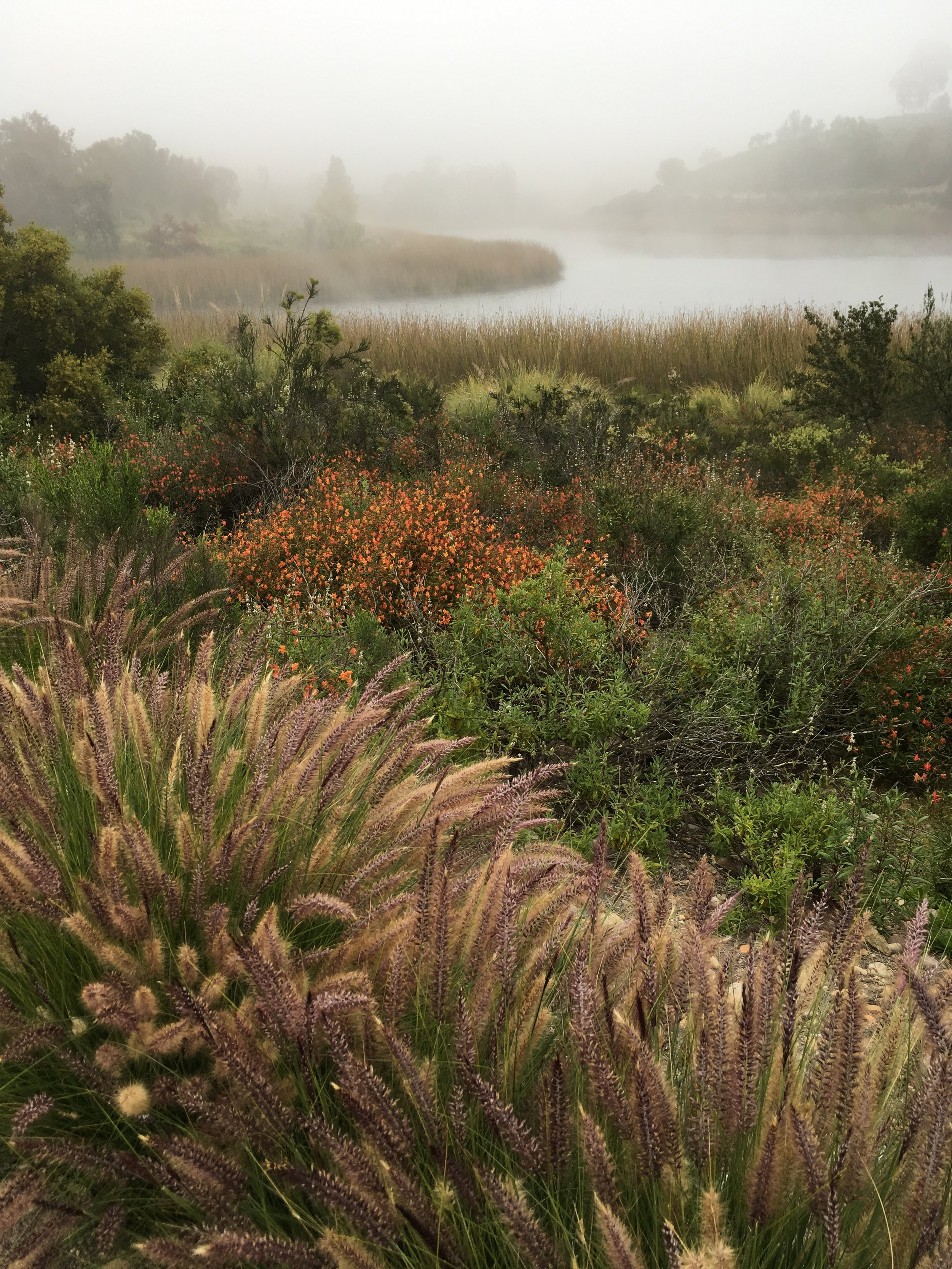 Lake flora on a foggy morning.