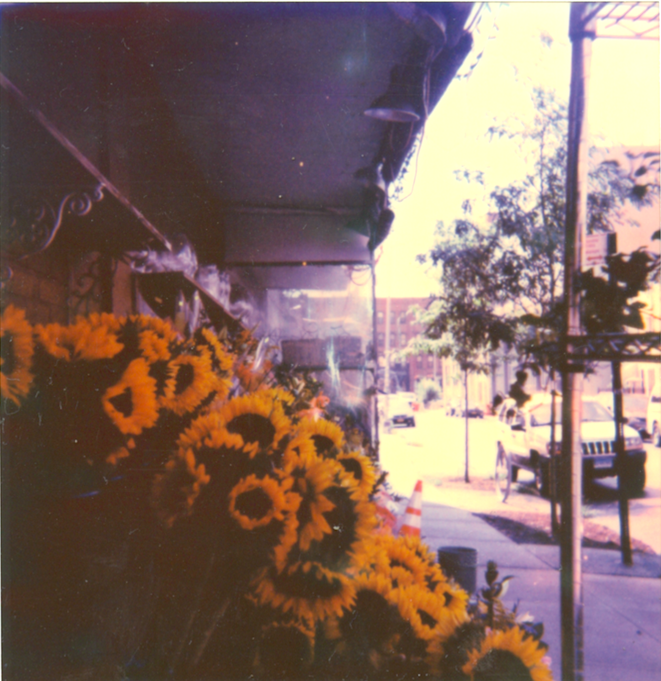 Polaroid+Sunflowers+Burg.png