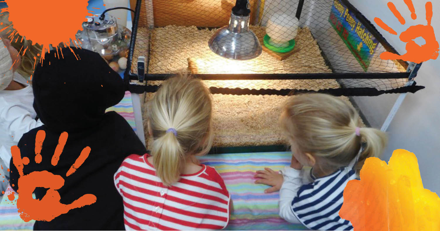 Hatching excitement at St Nicholas Early Education Newcastle West