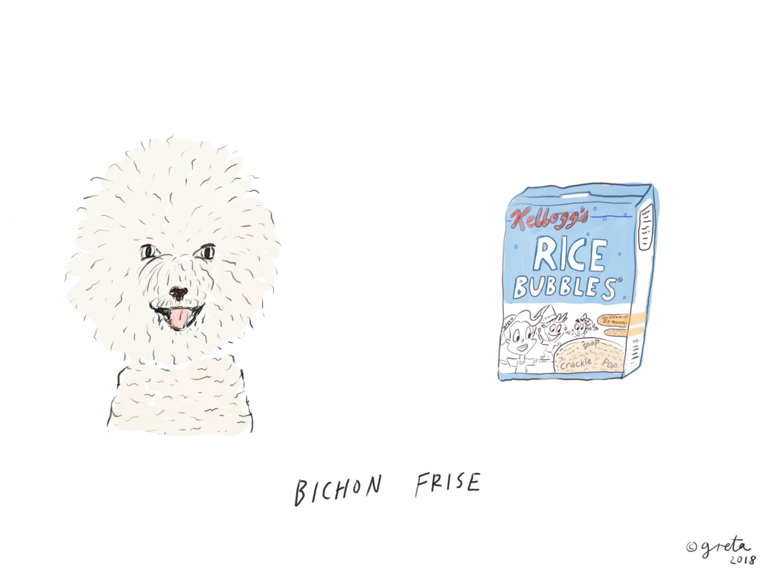 Bichon.PNG