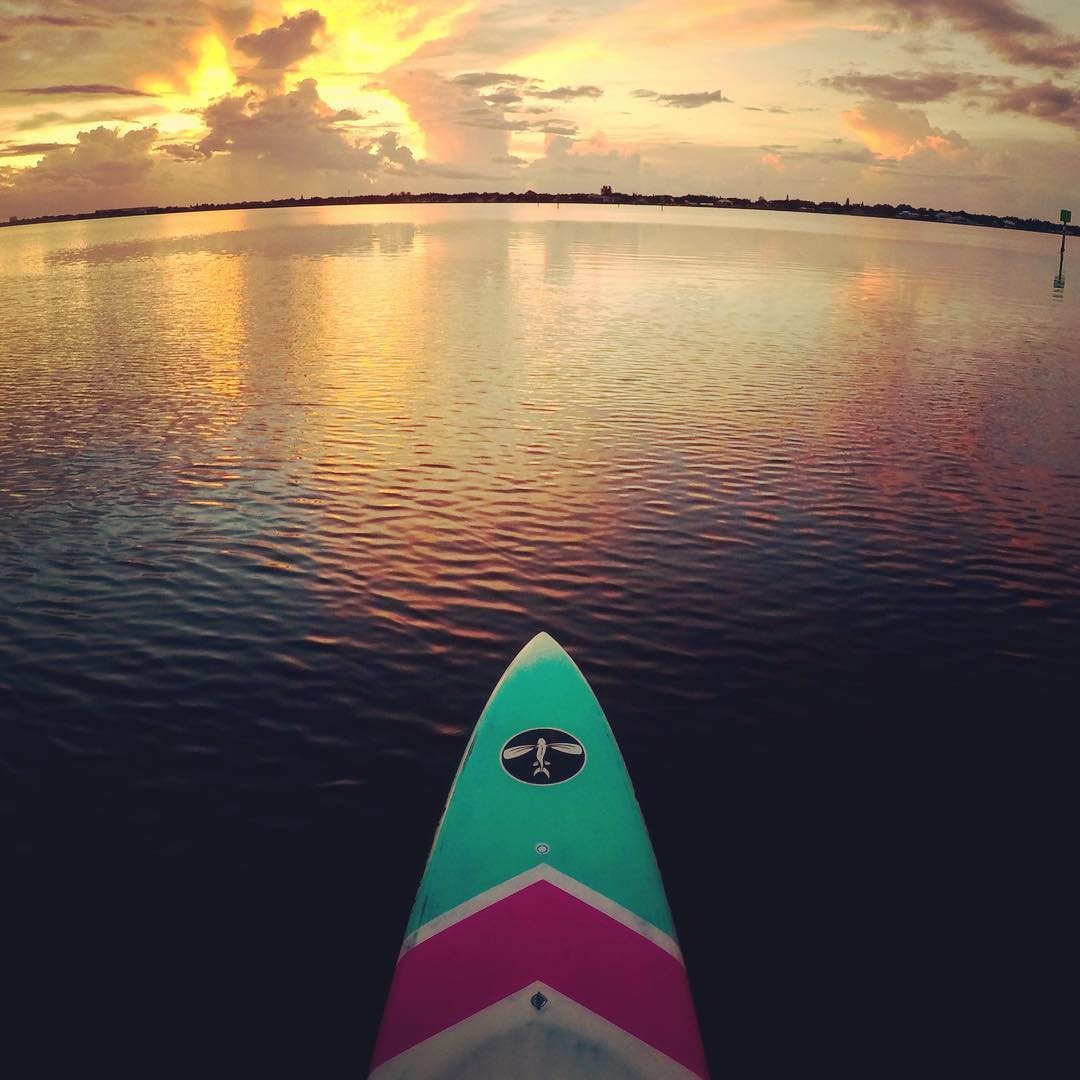 FLYING FISH BOARD COMPANY - FIND YOUR GLIDE
