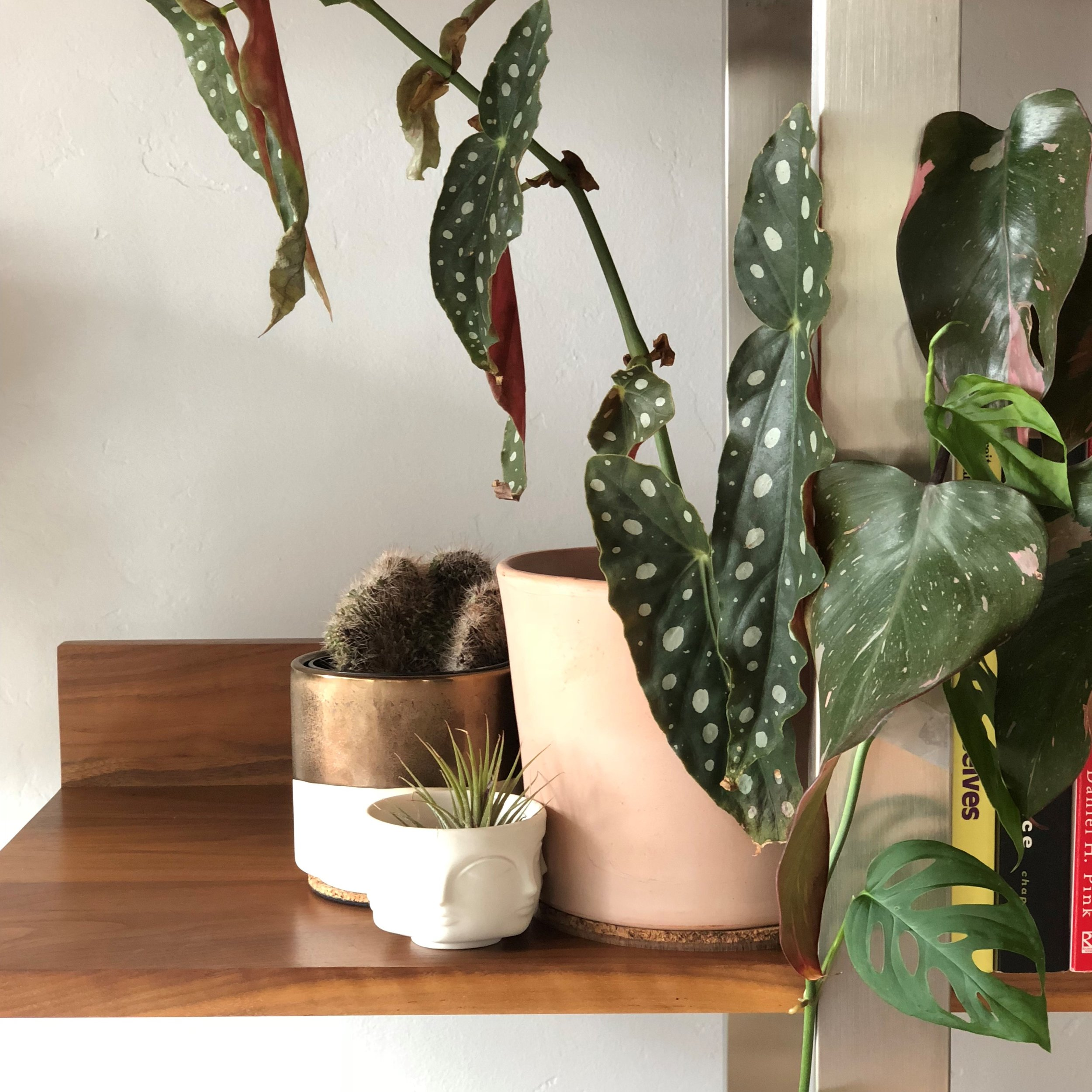 One of my favorite variations on standard terra cotta is this clean lined shape. I especially love the lighter, rosy color. The pot with the cactus is from Pigment (shoppigment.com). The little face airplant holder is actually a votive holder designed by Jonathan Adler (jonathanadler.com).