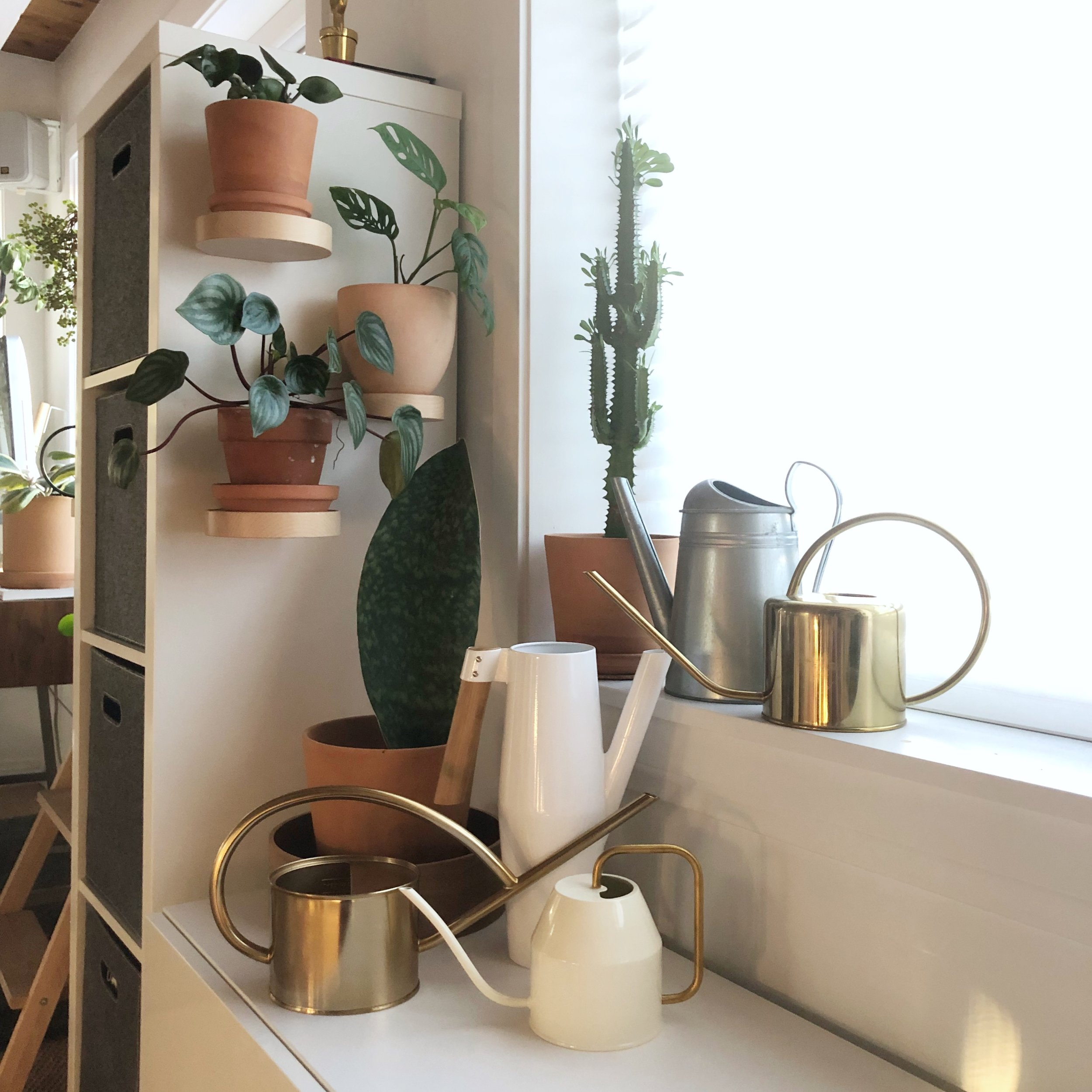 My collection of watering cans. I use them all - the larger ones I fill with filtered water from the garden hose (read on), bring inside then fill the smaller ones. I prefer the smaller, long narrow spout for watering container plants.