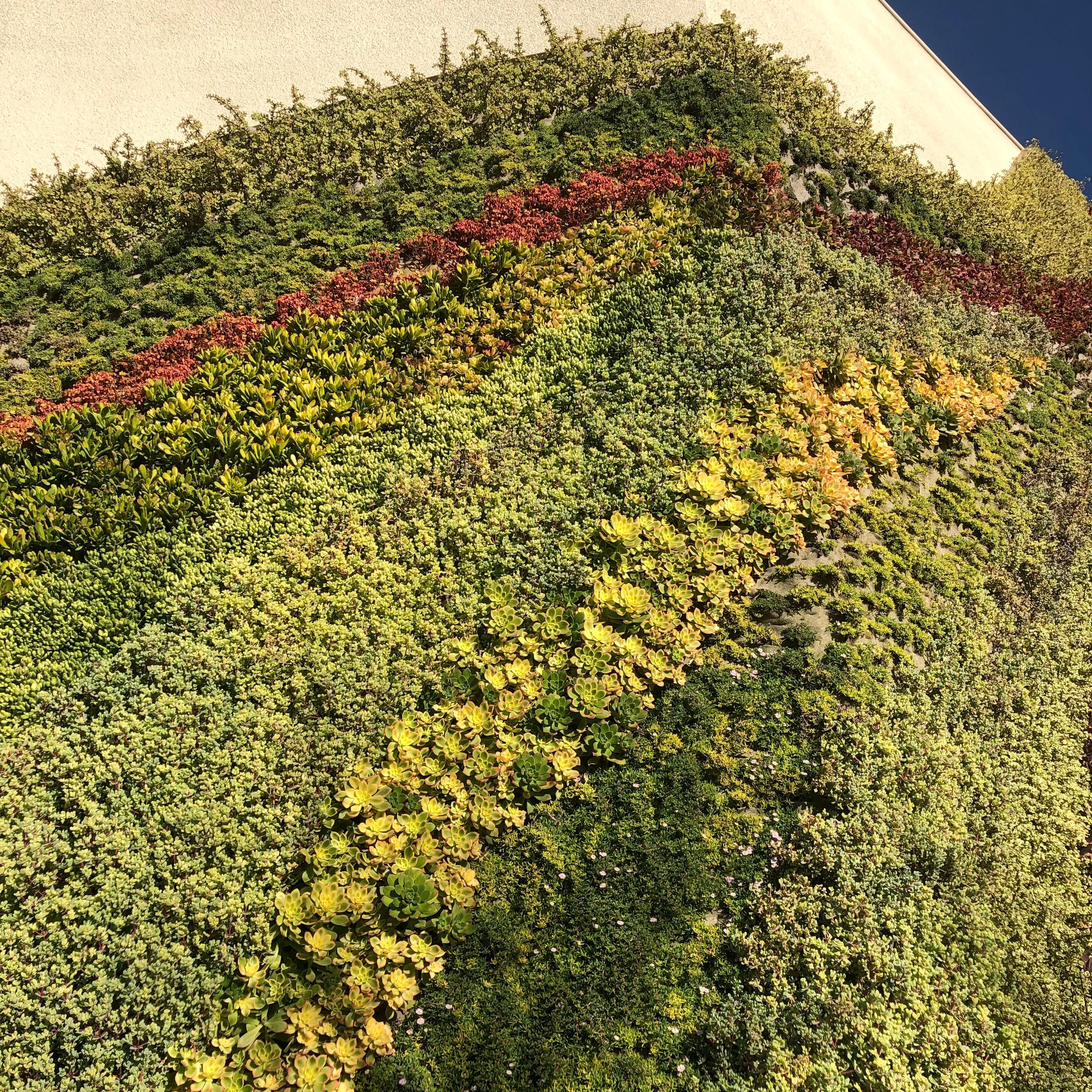 The wall has 5,000 plants and requires regular maintenance.
