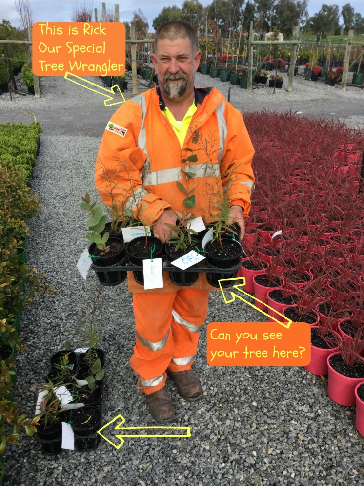 Rick tree wrangler  - Rick looks after the plants atHeyne's Wholesale Nursery. The tree that you potted comes intoRick's care.