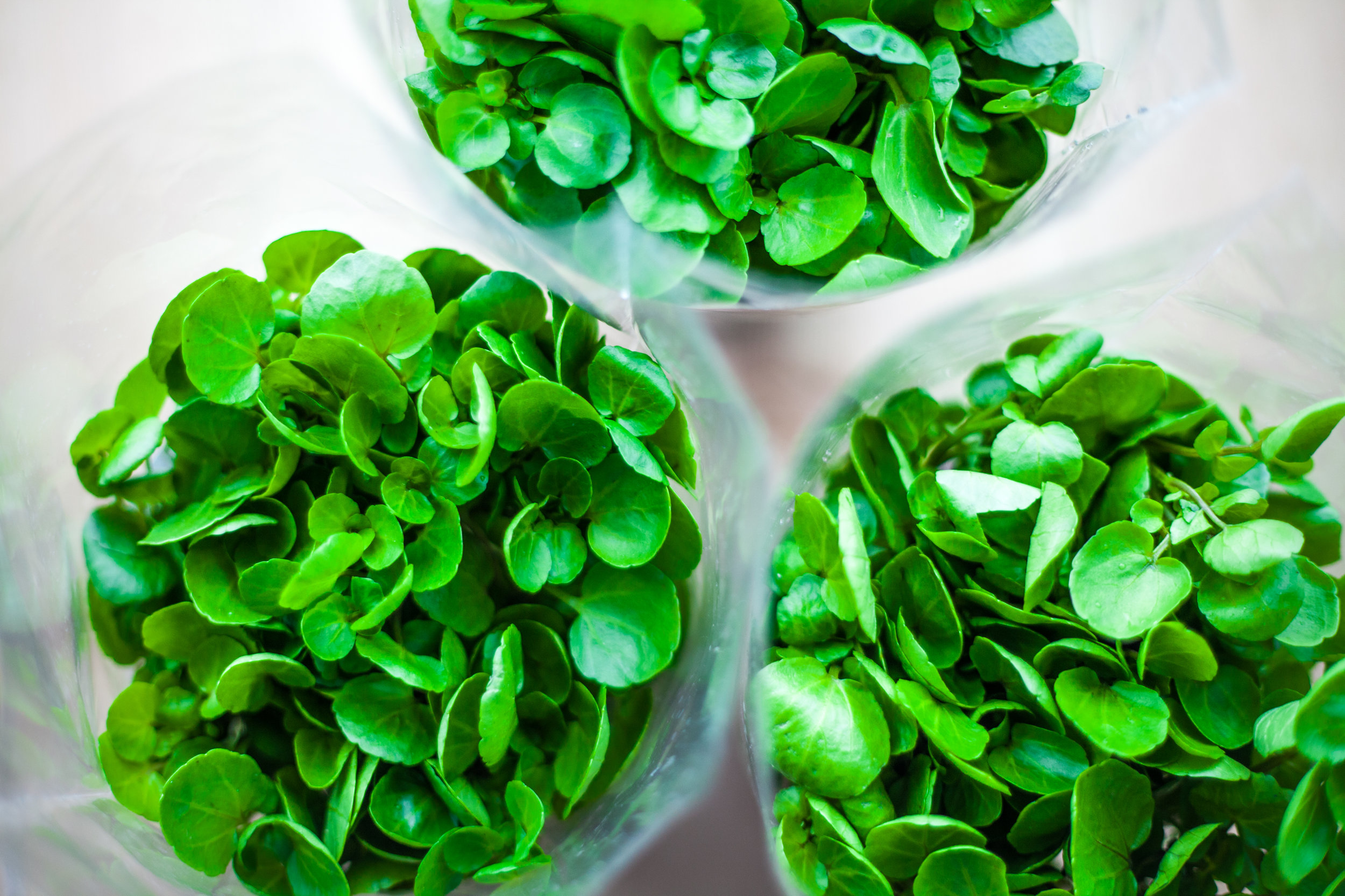 Three Watercress Bunches on White Background.jpg