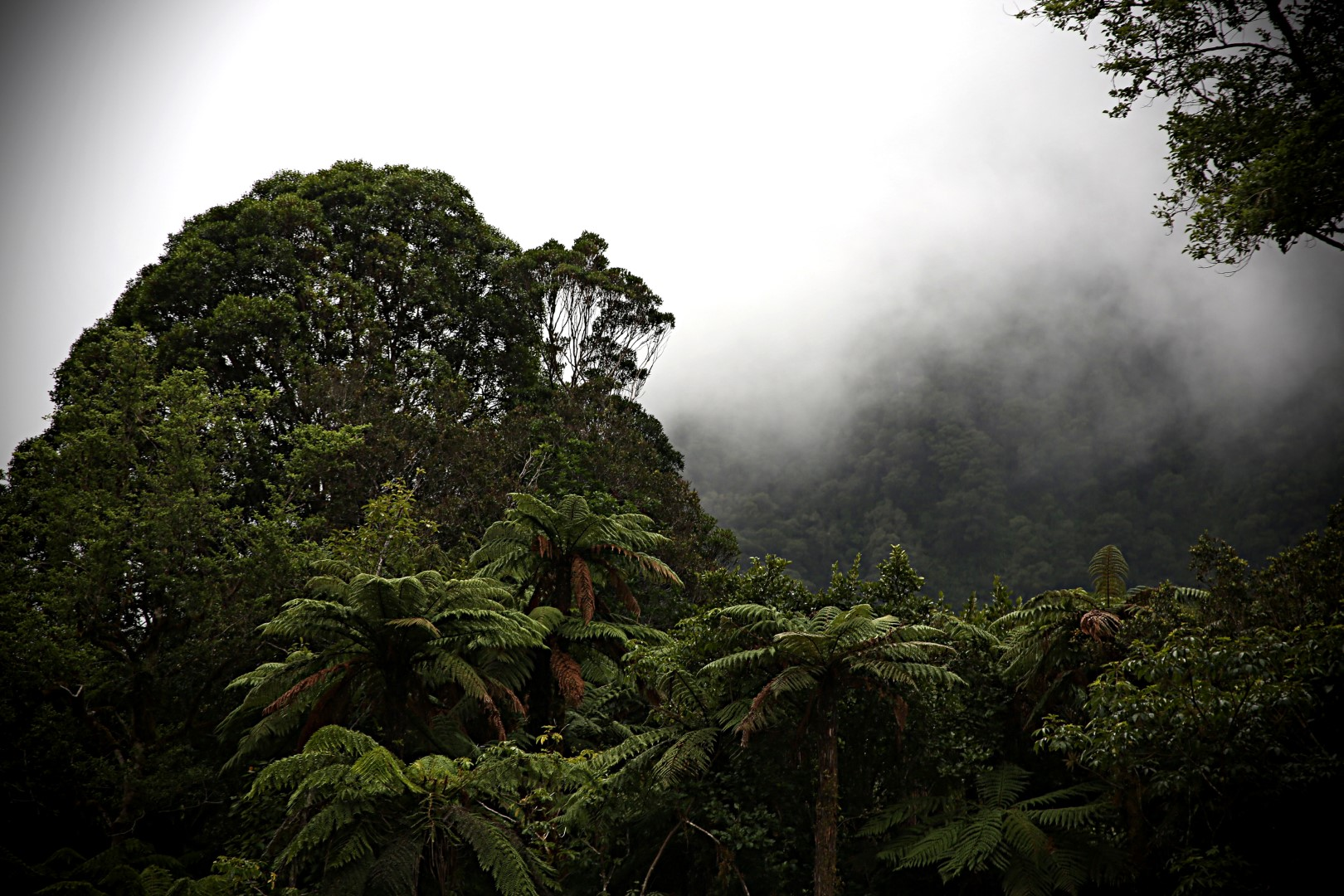 Tai poutini national park (Large).jpg