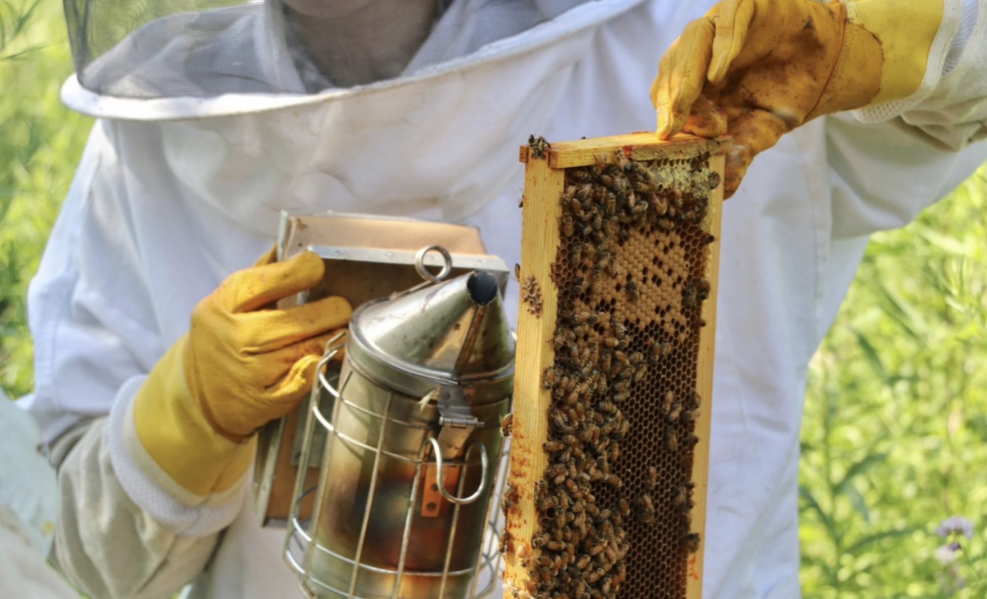 "Yale scientists probe ""magical"" royal jelly for possible clues to control cancer - Royal jelly, or milky-white ""bee milk,"" has long been known for its mysterious growth effects on future queen honey bees, while also hailed by some as an anti-aging, cholesterol-lowering super supplement…"