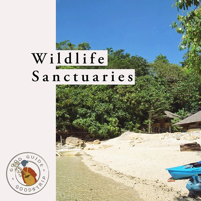 One of the Philippines' main drivers in tourism is its rich biodiversity 🐳🐠🦎 We have a lot to offer in terms of nature and wildlife. But wildlife tourism is a tricky beast (no pun intended). Here's a Good Guide from the Good Trip pointing towards some wildlife tourism sites that are properly planned and managed.  These places have worked on improving the perceived value of live animals, providing opportunities for nearby communities, lowering hunting and poaching, and growing funds for these protected areas and reserves!🌳 Read about it more at bit.ly/sanctuariesPH  Note: The Good Trip takes the debate on responsible wildlife tourism seriously. If you have a comment on or against any of these sites, or any other wildlife centers, feel free to get in touch via email (thegoodtripph@gmail.com)! ✨