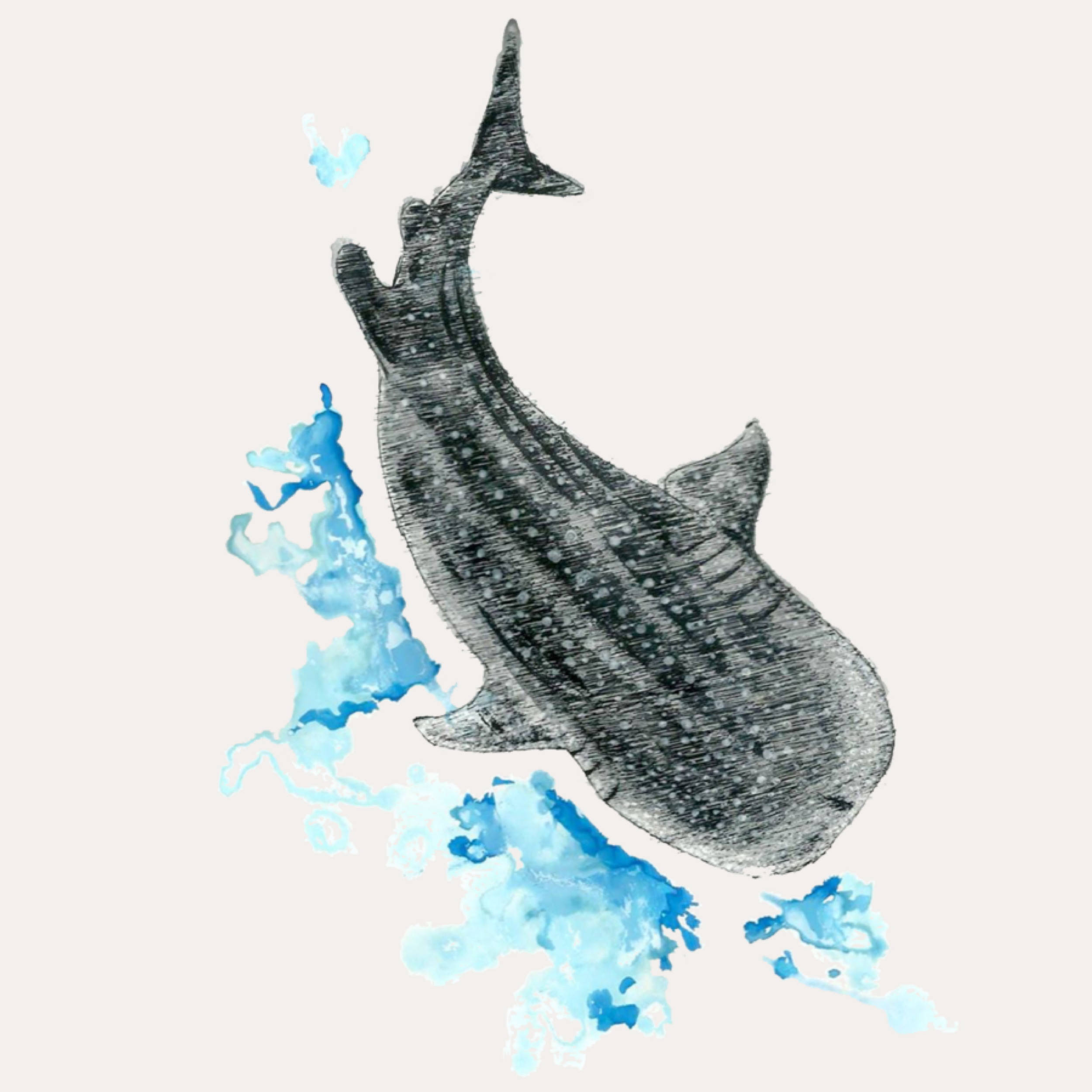 Whale Cover.png