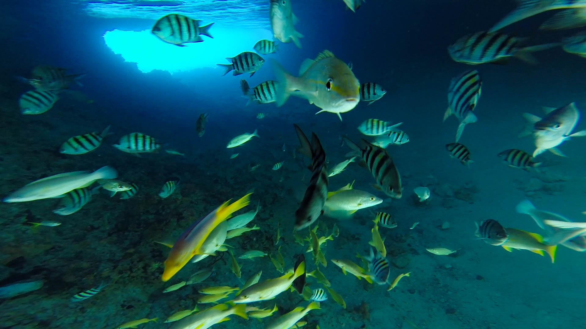 Grotto Fish 2.jpg