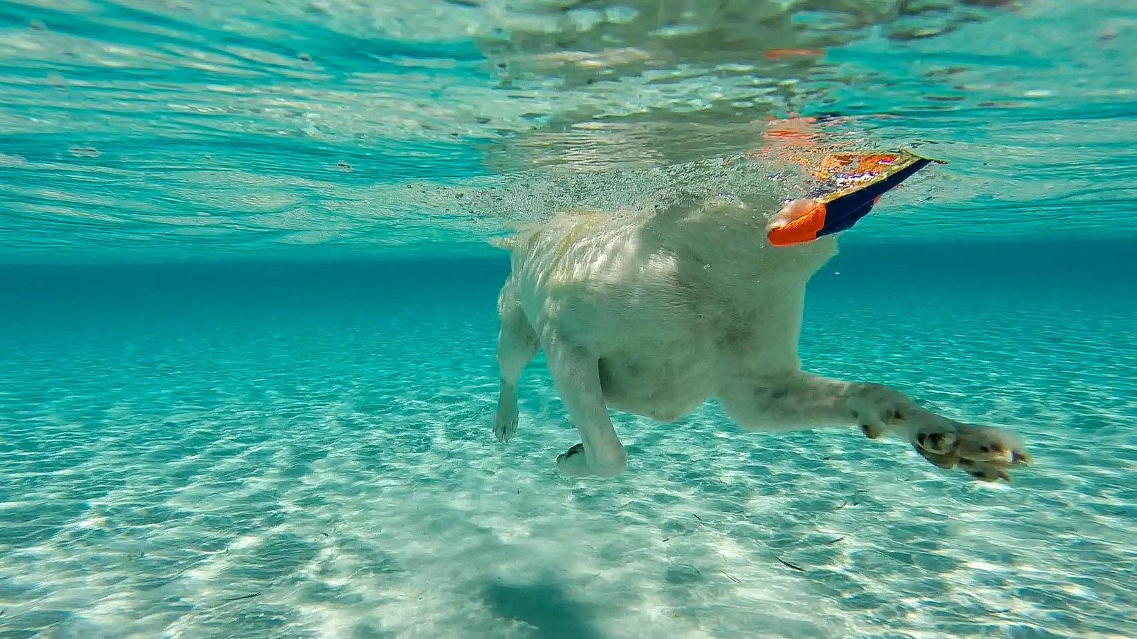 Sugar underwater.jpg