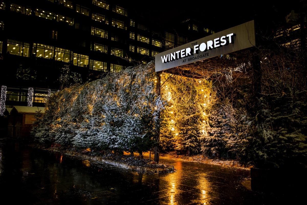 Broadgate Winter Forest  (166).jpeg
