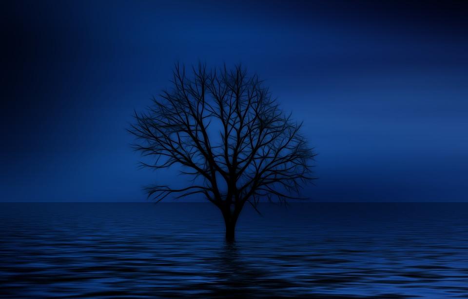 tree-NATT.jpg