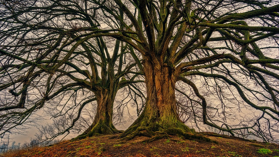 tree-3097419_960_720.jpg