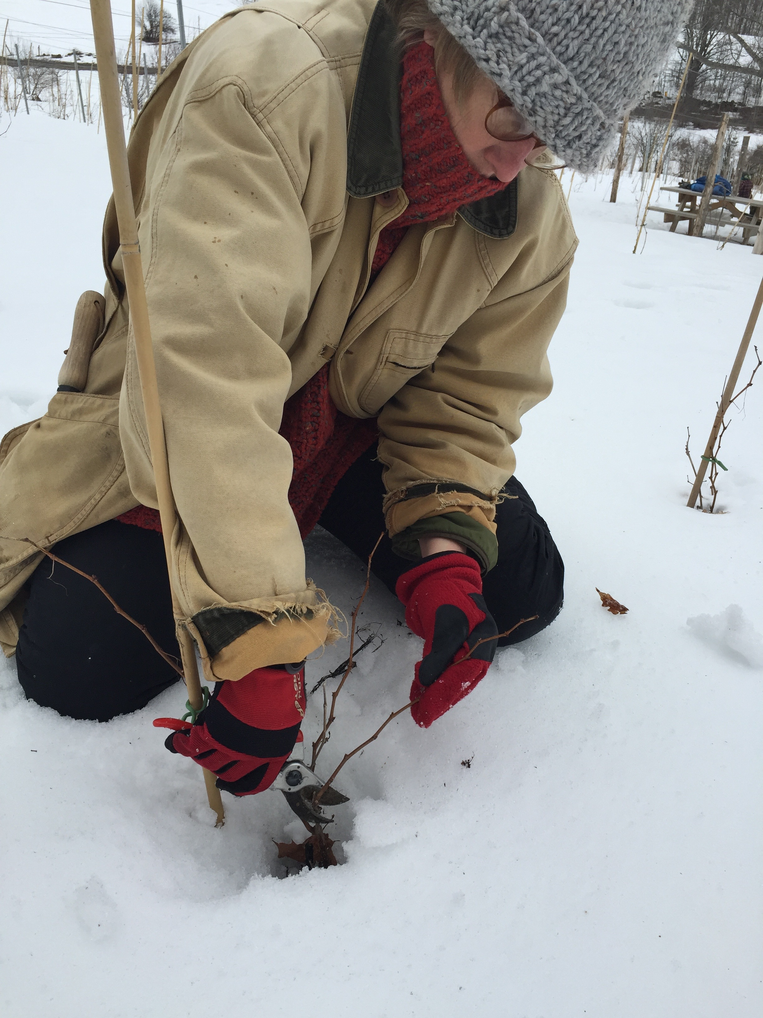 39 S pruning in snow.jpg