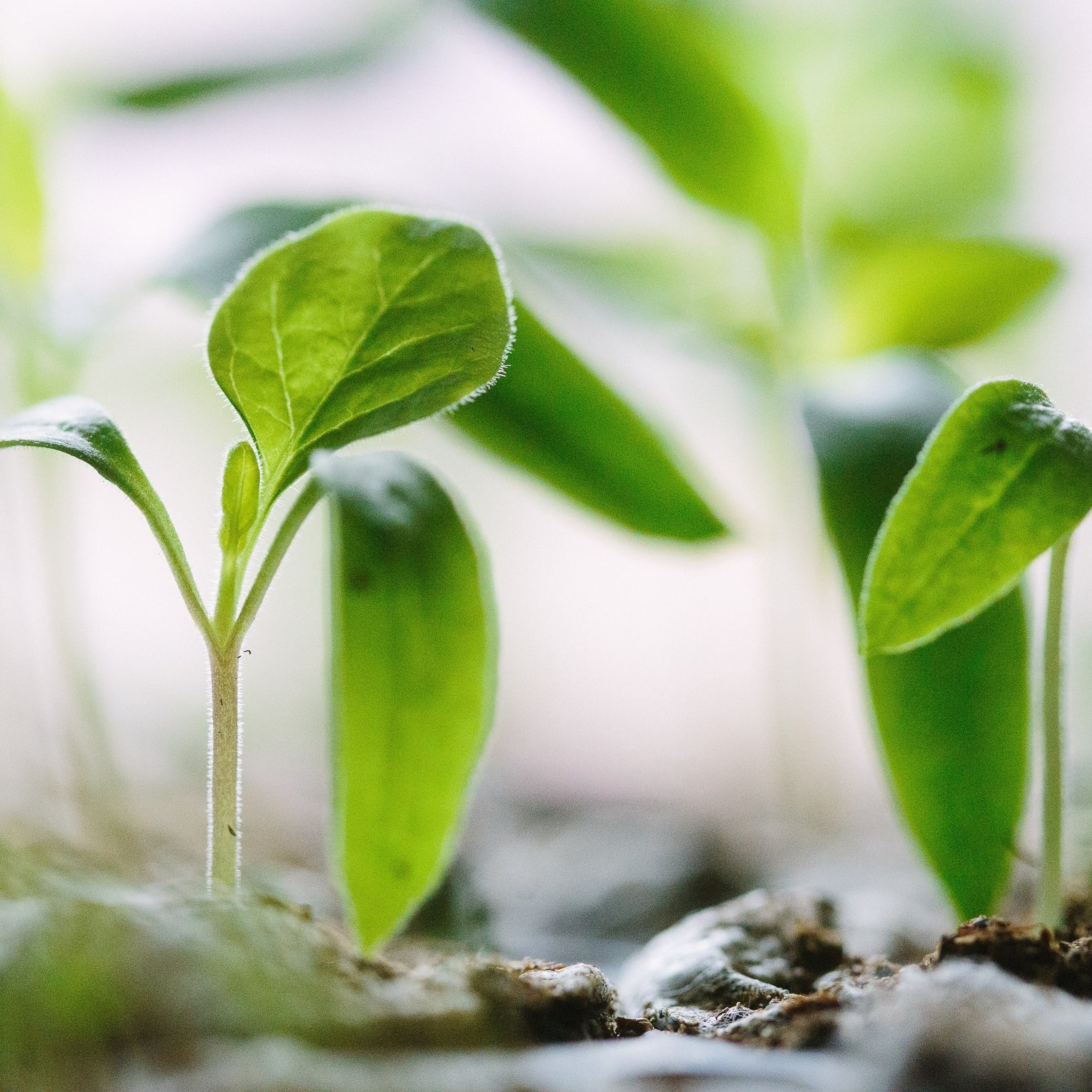 The value of human beings and plants