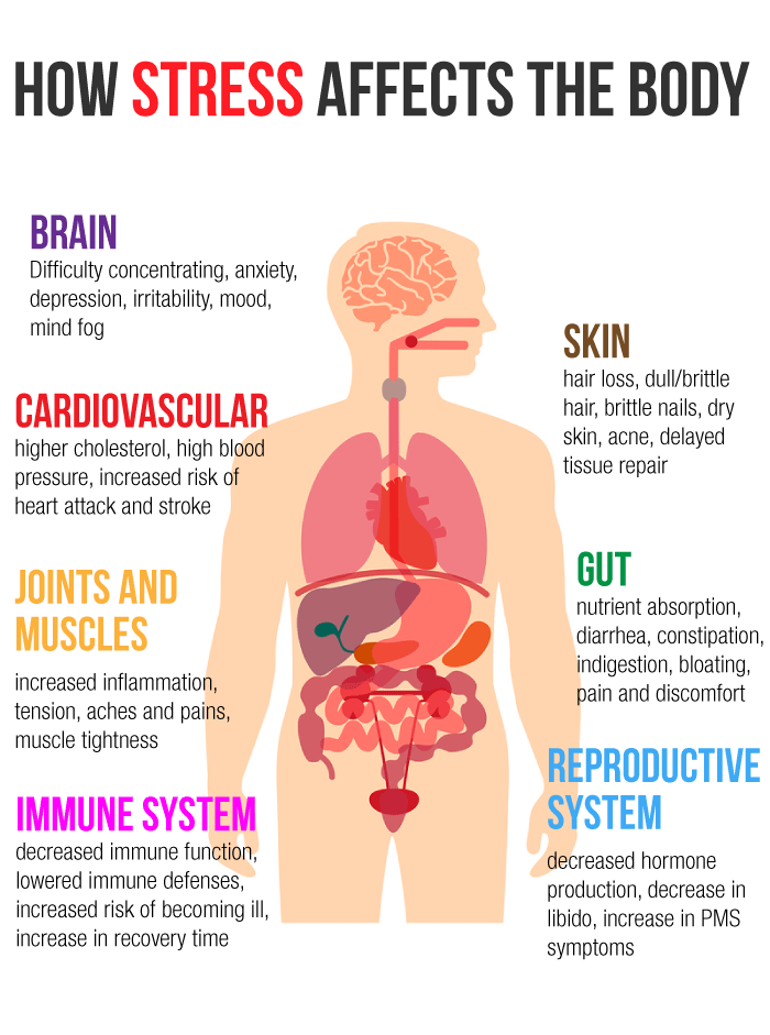 how-stress-affects-the-body-1.png